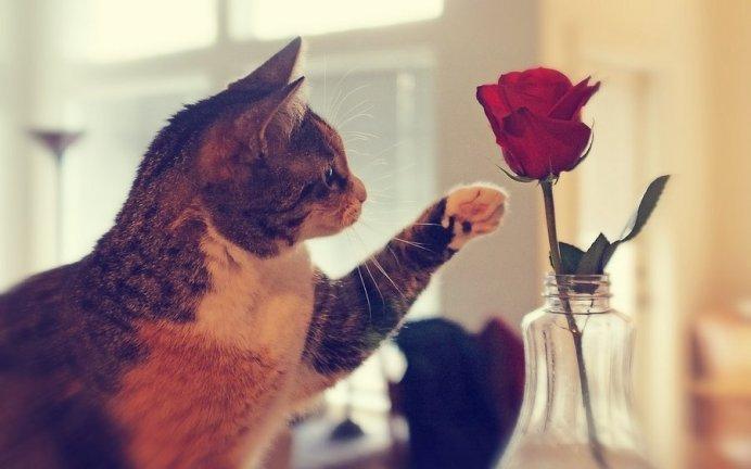 Кошка - любопытная натура