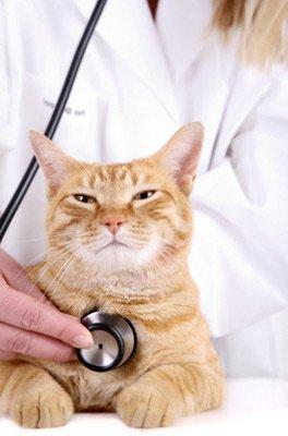 Если вы заподозрили, что кошка заболевает, обратитесь в клинику