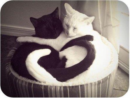 Кошки трутся друг о друга, оставляя свой запах