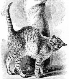 Кошка трется о ноги своего хозяина, проявляя свою любовь