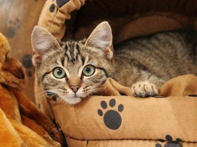 Обустройте кошке место отдыха в укромном месте