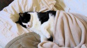 Во время болезни кошке нужен покой
