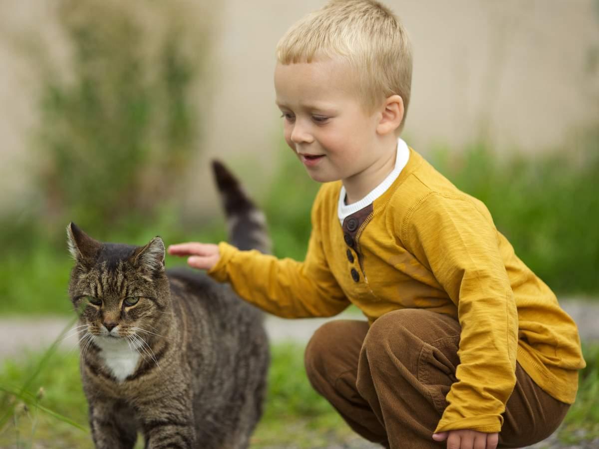 Почему кошки не любят когда их гладят