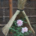 牡丹が満開でした。初詣にも、デートにもおすすめ。ぼたん庭園、鎌倉 鶴岡八幡宮
