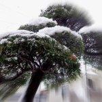 日本人の純白は、雪の色だと思います