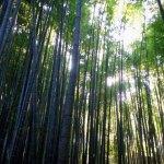 竹の寺 報国寺 外国人にも人気の禅寺です。アクセスデータ付き