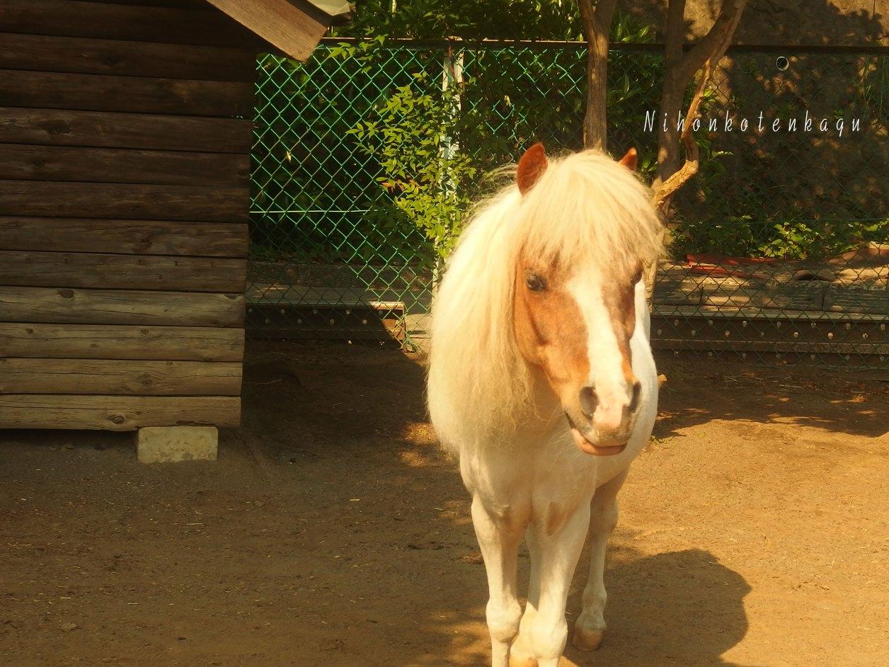 馬の博物館 ポニー
