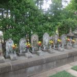 成福寺 小袋谷 横須賀線から見えるあのお寺です、唯一の浄土真宗?アクセスデータ付き。