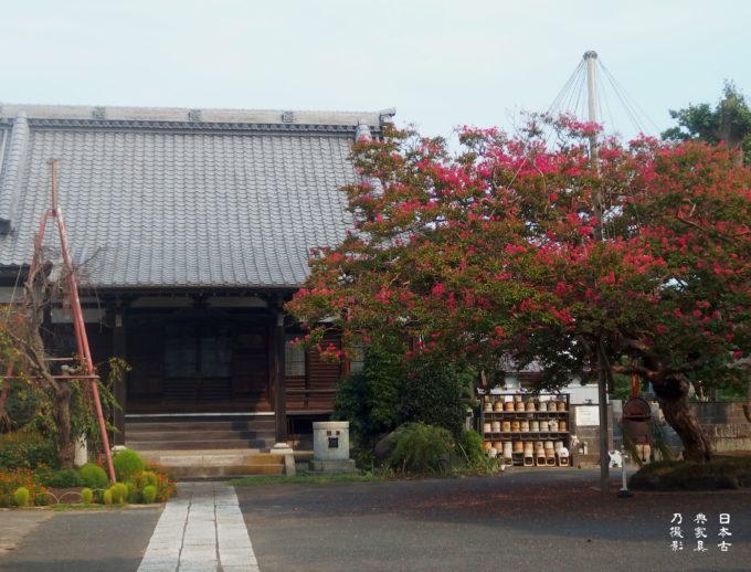 本興寺 本堂とさるすべり