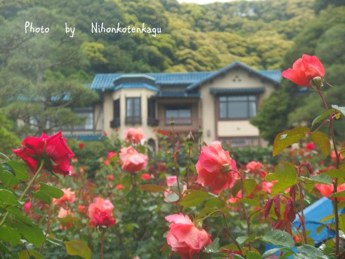 鎌倉文学館と薔薇園