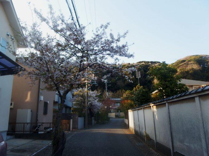 大宝寺への道