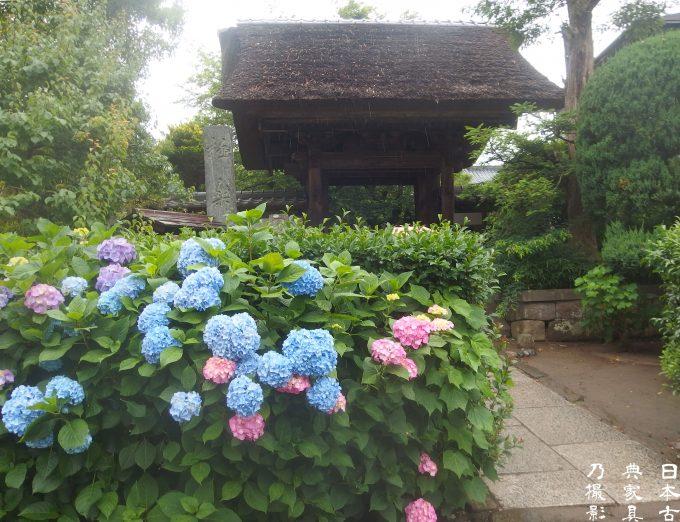 2018 年の鎌倉の紫陽花は、早い!明月院・極楽寺・成就院・光則寺と鎌倉文学館の薔薇を見てきました。