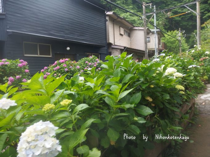御霊神社より江ノ電の線路の紫陽花