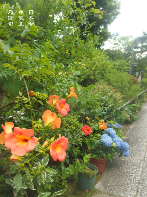 妙法寺 境内 花