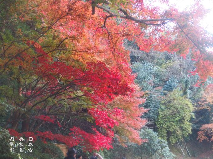 2018年の鎌倉の紅葉、円覚寺門前、長寿寺、明月院後庭園、瑞泉寺と見てきました。