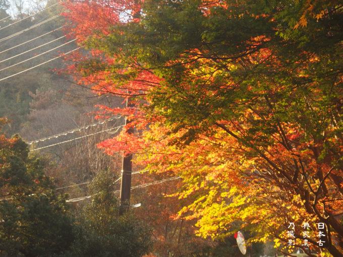 瑞泉寺近くの紅葉