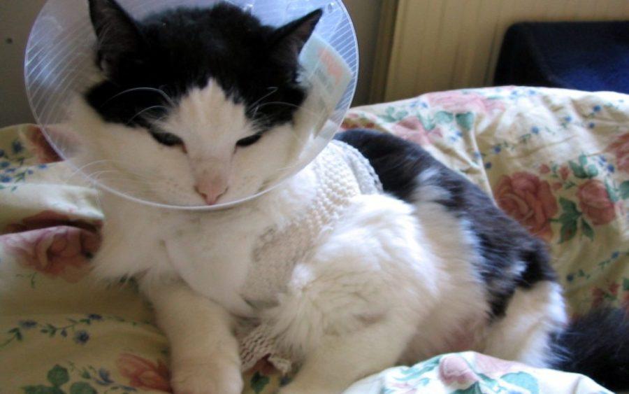 Perlindungan yang andal setelah operasi