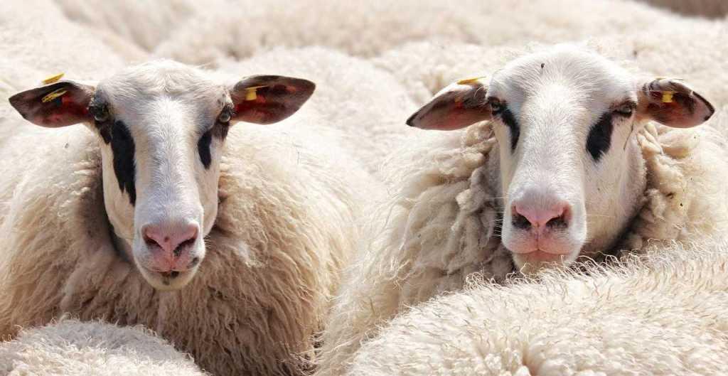 Valitse villalanka, jolla on vastuullisuudesta kertova sertifikaatti. Hyviä vaihtoehtoja ovat myös kotimainen lampaanvilla tai luomuvilla. Eettisin ja ekologisin on kierrätysvilla.