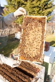 Aamulla ja illalla mehiläiset ovat yleensä ärhäkällä päällä. Paras hetki pesien hoitoon on keskipäivä, jolloin suurin osa työläisistä on lentomatkalla.