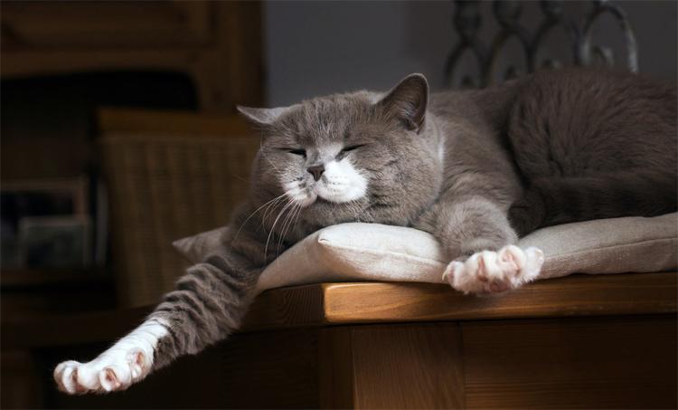 Почему храпит во сне кошка тревожный или нормальный симптом