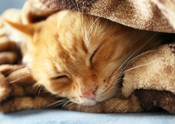 Какая нормальная температура у кошек как измерить причины повышенной или пониженной температуры