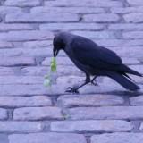 聖書から読み解く、ワクワクを追い求めても生きていける理由 マナと空の鳥の話