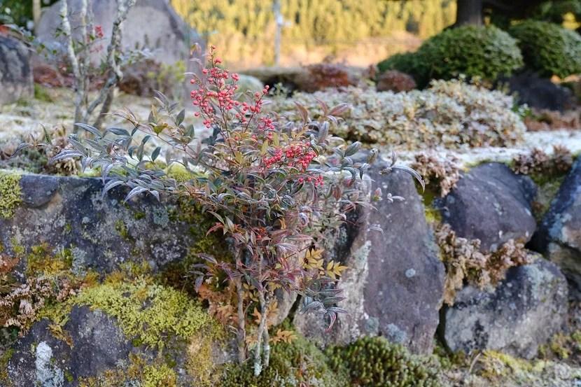 冬の庭の赤南天の風景写真
