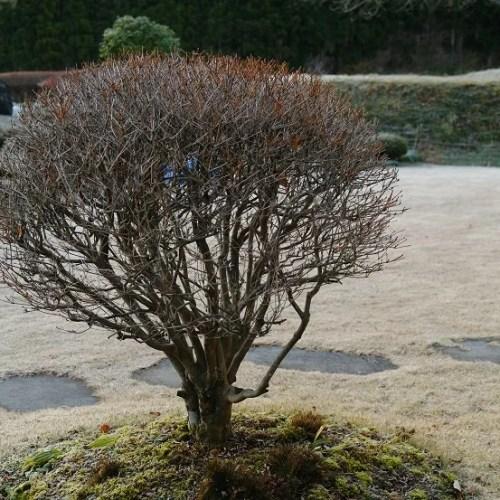 日本庭園の植木の写真