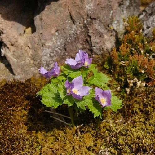 x-pro3で撮影の庭の花の写真