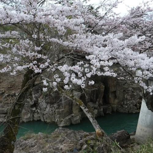 厳美渓の春の写真