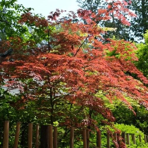 大崎八幡宮の境内内の写真