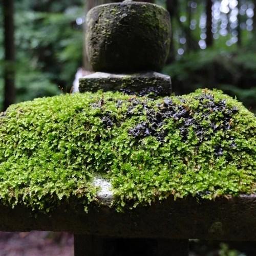 神社の灯篭の写真