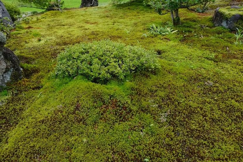 庭の夏の風景写真