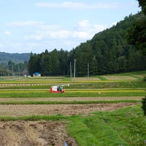秋の稲刈りの風景写真