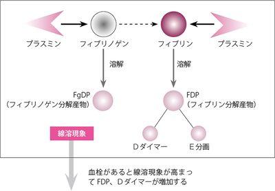 FDP、Dダイマー(FDP)とは - コトバンク
