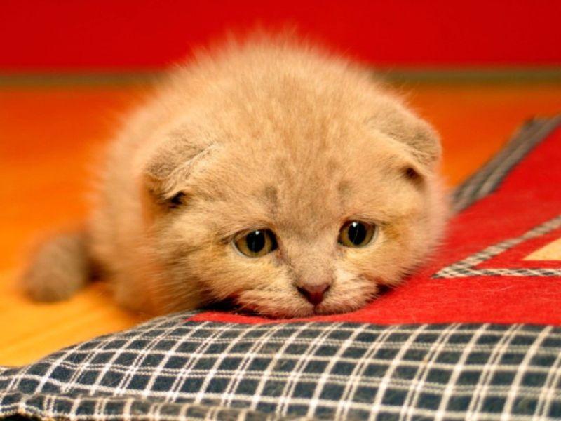 Для, открытки грустный котенок