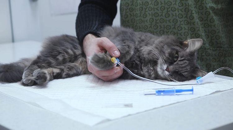 Místa, kde můžete dát intramuskulární injekční kočku