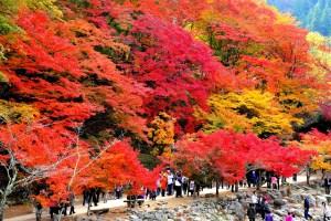 香嵐渓紅葉