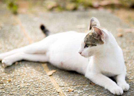 Сколько длится беременность у кошек, особенности питания и ухода. Сколько длится беременность Сколько времени продолжается беременность у кошек
