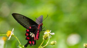 虫・昆虫関連の漢字が入った苗字 一覧 86 種類|難読・珍しい名字