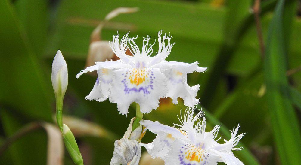 かっこいい『カタカナの花の名前』一覧 - 英語表記・日本語名付き