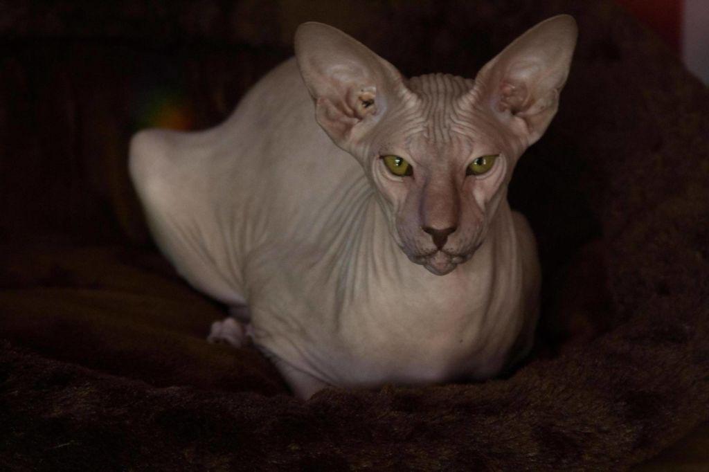 nježna uska maca