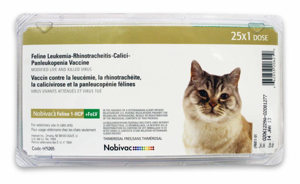Лечение чумки у кошек. Прививка от чумки кошке когда делать