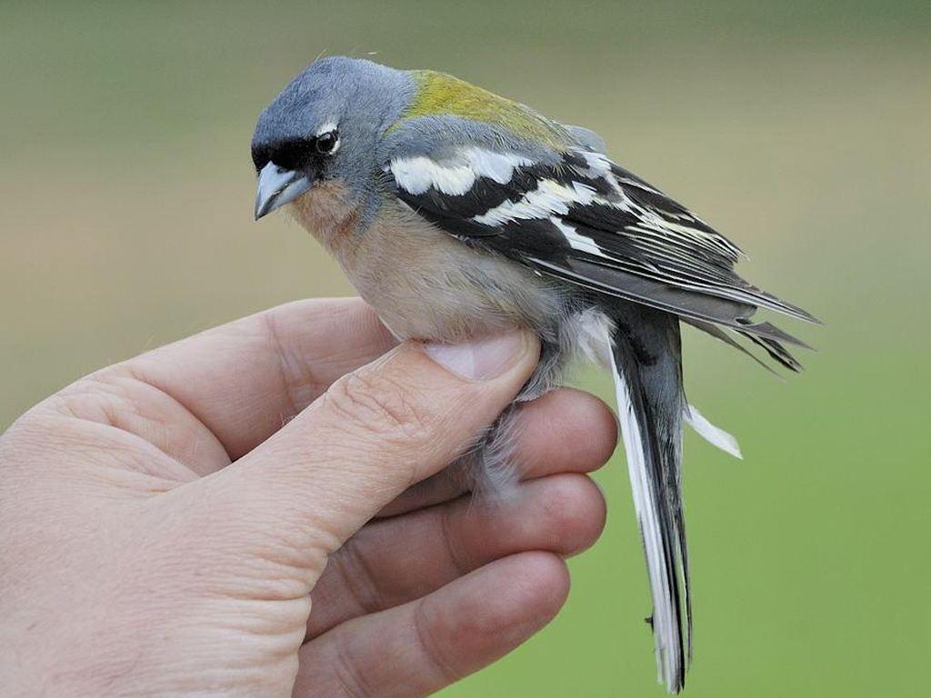 viziunea păsării iubitoare