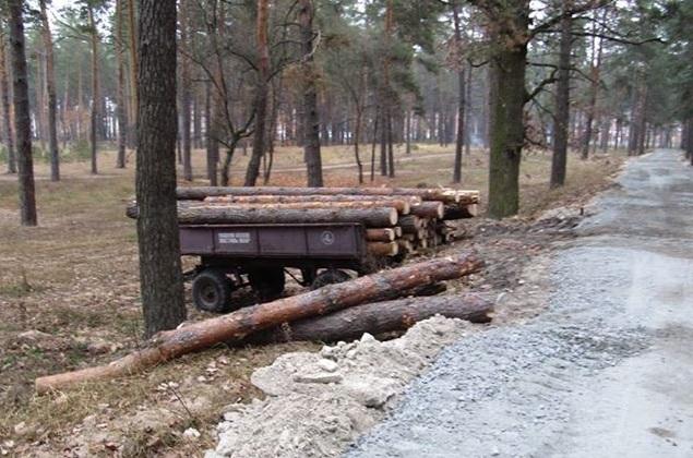 У Голопристанському районі невідомі особи вчинили порубку деревини сосни
