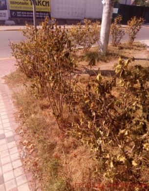 """Ірпінські чиновники """"закопують"""" мільйони бюджетних коштів та називають це """"озелененням"""""""