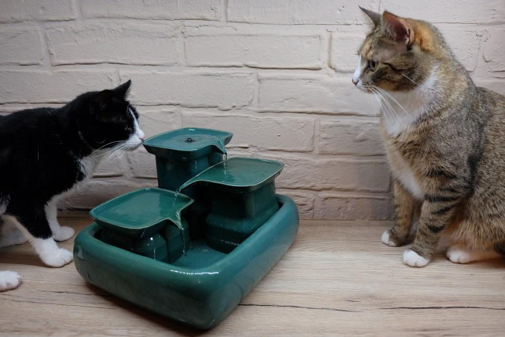woda dla kota