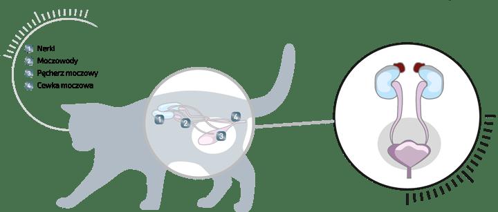 sucha karma problemy z układem moczowym