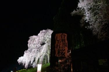 二本松市の桜名所2017、合戦場のしだれ桜LEDライトアップ