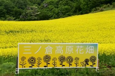 福島県喜多方市三ノ倉高原の菜の花畑2017